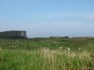 "Farms and ""Sea Hill Sheep"""